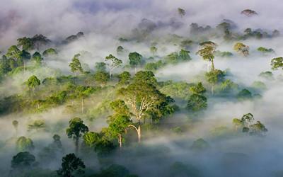 BorneoRainforest_EN-US9662723436_1920x1200_副本_副本