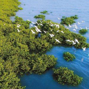MCF滨海湿地保育